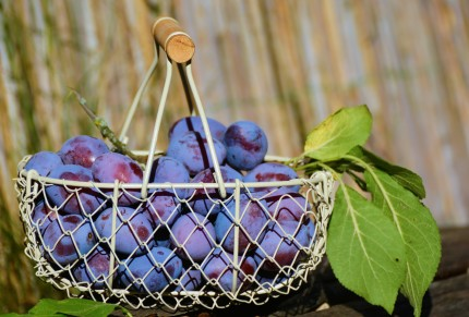 Traditional plum products - THE TRENČÍN REGION, SLOVAKIA