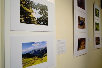 "Photo exhibition ""Capturing beech forests"""