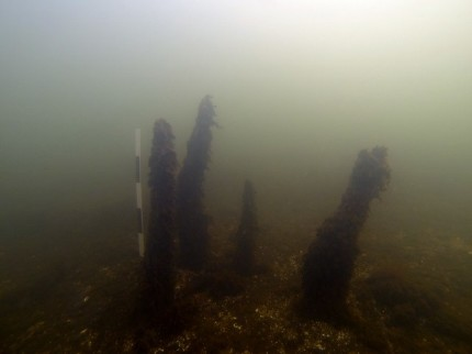 Underwater relicts of medieval harbour in Puck Lagoon (Photo: National Maritime Museum, Gdansk)
